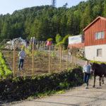 Soldalen besøksgård